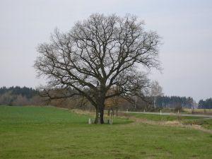 gc1ba2r vlastin dub (traditional cache) in plzeňský kraj