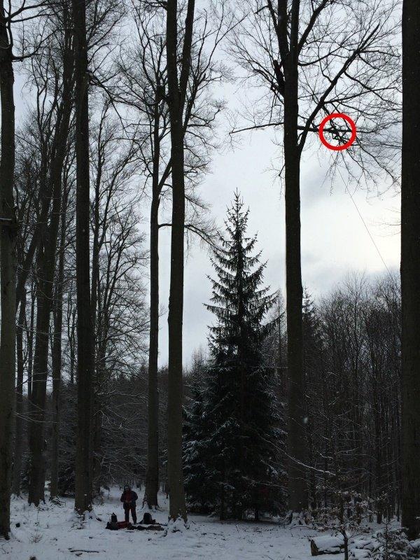 Celkový pohled na strom